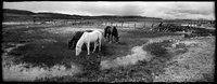 Horses at Potts