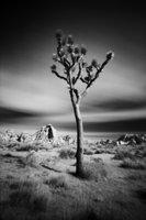 Tree (pinhole series)