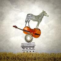 Balancing Zebra