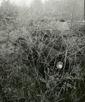 Truck in Underbrush
