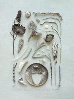 Meghan Crandall's Bones