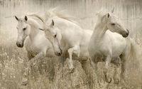 Mary Aiu's Danca do Cavalo Luisitano