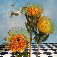 Meet the Artists, Summer Selections at the Robert Anderson Gallery