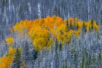 First Snow, Ute Pass, CO