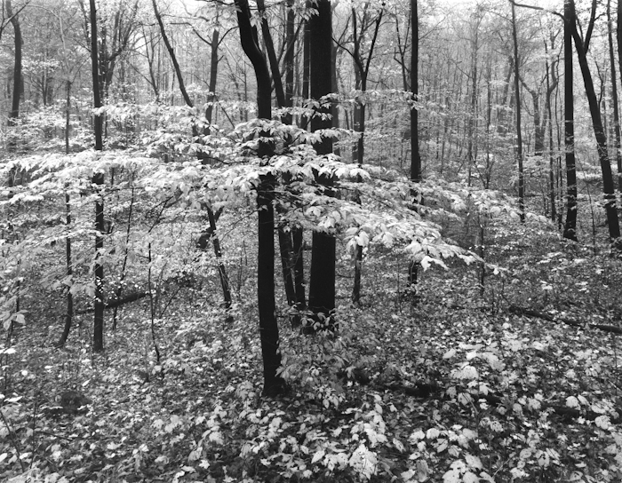 Watchung Forest, photo