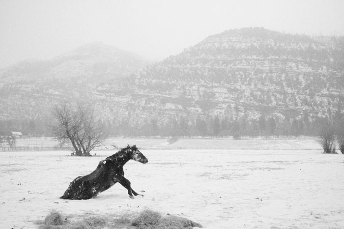 horse, photo
